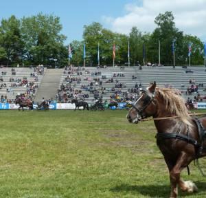 Pferdinter 5 2012 22