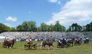 Pferdinter 5 2012 23