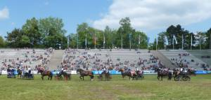 Pferdinter 5 2012 24