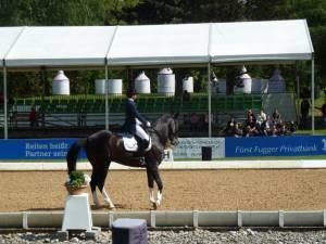 Pferdinter 5 2012 31