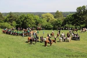 Pferdesegnung am 29.04 (15)